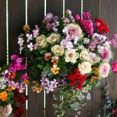 冬~春のガーデニングにおすすめの寄せ植え花