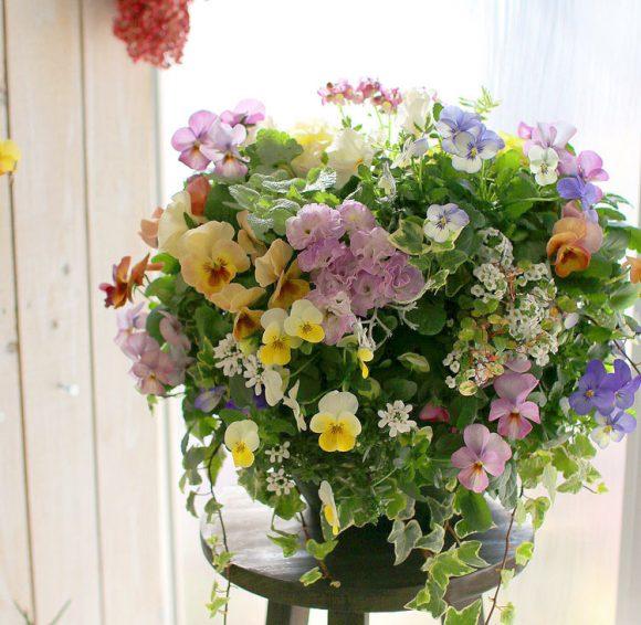 春のハンギングバスケットにおすすめな花