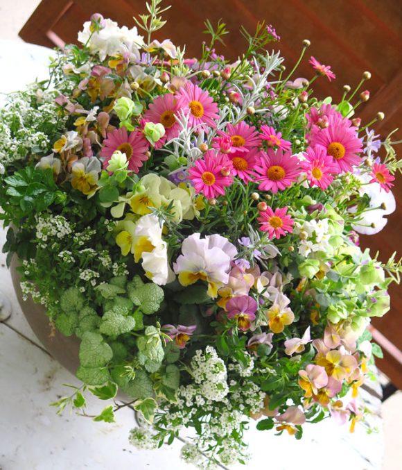 冬の花と一緒に植えるときの注意点