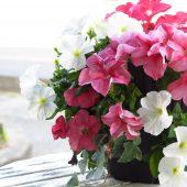 カラーごとの花言葉