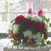 冬ならでは!雪との写真をとってみよう