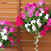 2020年敬老の日 リンドウ以外でおすすめのお花4種類
